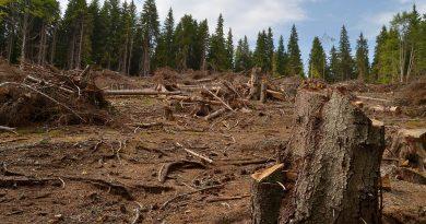 Raport: Autoritățile de control depistează doar 1% din totalul tăierilor ilegale de lemne